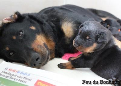 pups week 1-2