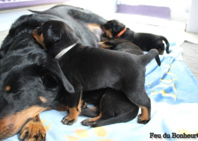pups week 3-4
